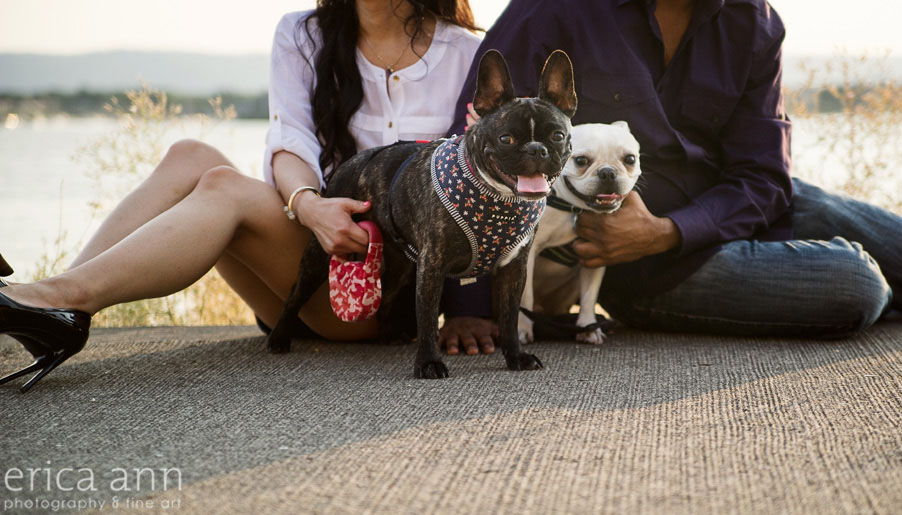 Portland French Bulldog Engagement
