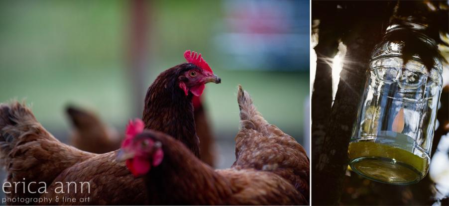 Backyard Hawaiian Wedding Photography Chickens